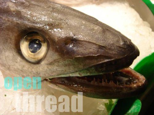 octickyfish