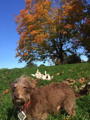 RiversidePark_Fall_Dogs